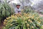 Giá gần trăm triệu, địa lan Sapa vẫn hút khách