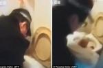 Trung Quốc: Đẻ rơi con xuống bồn cầu vì không biết mình đang mang thai