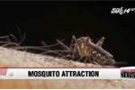 Phát hiện mới: Muỗi thích đốt người uống rượu