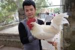 Video: Độc đáo gà 9 cựa đột biến trắng muốt