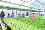 MM Mega Market Việt Nam tiếp tục đầu tư mạnh vào nông nghiệp