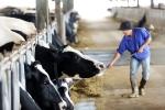 Điều gì khiến Mộc Châu Milk ghi điểm với người tiêu dùng Việt