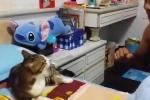 Cười vỡ bụng clip mèo luyện hát opera 'thần sầu'