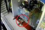 Clip: Khỉ 'siêu đạo chích' táo tợn cướp cửa hàng trang sức, ông chủ bất lực