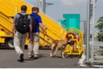 Video, ảnh: Chó nghiệp vụ Mỹ kiểm tra sân bay Đà Nẵng trước giờ ông Trump tới