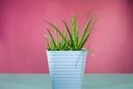 Hút sạch chất độc hại trong nhà với 12 loại cây cảnh dễ trồng