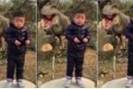 Cười té ghế clip bé trai cười méo xệch khi chụp ảnh với 'khủng long'