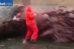 Khiếp đảm clip xác cá nhà táng khổng lồ phát nổ như bom
