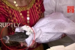 Thị trưởng Mexico cưới cá sấu làm vợ: 'Cô dâu' bị khóa mõm khi hôn chú rể