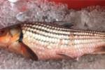 Nồi cá kho 12 triệu đồng được nhà giàu Việt săn lùng ăn Tết