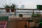 Mẹ Việt khoe vườn rau 4m2 xanh mướt mát ở hành lang chung cư