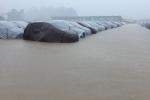 Hyundai Thành Công 'tháo kho, xả hàng' nghìn xe i10, Santafe bị ngập nước?