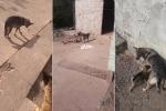 Clip: Hành động bất ngờ của chó mẹ khi được cho đồ ăn khiến dân mạng rơi lệ