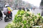 Ảnh: Hà Nội 'khoác áo' trắng tinh khôi những ngày hoa bưởi xuống phố