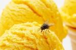 Ra mắt loại kem béo ngậy làm từ côn trùng
