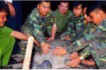 Từ chối 150 triệu đồng, ngư dân quyết thả rùa 120 kg về biển