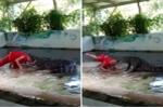 Người đàn ông liều lĩnh nhét đầu vào miệng cá sấu và cái kết thảm họa