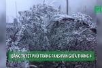 Clip: Băng tuyết phủ trắng đỉnh Fansipan giữa tháng 4