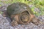 Thầy giáo cho rùa ăn sống chó con trước lớp gây phẫn nộ