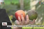 Hé lộ mánh khóe giữ trái cây tươi mãi bằng hóa chất của người bán