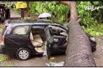 Hà Nội: Giải cứu ôtô bị cây cổ thụ đè bẹp trên phố Núi Trúc