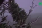 Du khách phấn khích ngắm băng giá trên đèo Ô Quý Hồ, Lào Cai