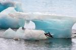 Băng ở Nam Cực tan nhanh 2 lần so với dự báo, hàng trăm triệu người bị đe dọa