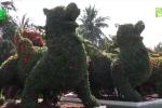 Cây kiểng hình thú 'siêu độc', giá cả trăm triệu đồng của nghệ nhân Tiền Giang