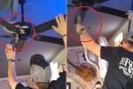 Clip: Thanh niên tay không bắt rắn trên quạt trần, đám đông hú hét kinh hãi