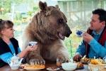 Clip: Cặp vợ chồng nuôi gấu khổng lồ làm thú cưng suốt 23 năm