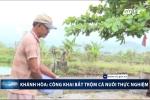 Khánh Hòa: Dân ngang nhiên câu trộm hàng tấn cá nuôi thực nghiệm