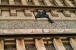 Bị phàn nàn tàu tới trễ, nhân viên đường sắt Nhật Bản tự tử ngay tại chỗ