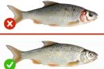 Dấu hiệu phân biệt cá tươi và cá ươn, tránh ăn phải cá ươn thối