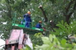 Chi phí đánh chuyển gần 1.000 cây xanh đường Phạm Văn Đồng thế nào?