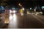 Cây xanh bật gốc, đè trúng một phụ nữ đi đường ở Nghệ An