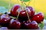 Bật mí những đồ ăn làm giảm cơn đau của người bệnh gout