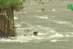 Bão số 4 gây mưa lớn, diễn biến phức tạp: Ẩn họa khôn lường từ hồ đập nhỏ