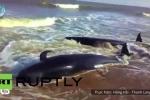 Video: Cá voi tự sát tập thể ở Ấn Độ