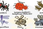 Từ vựng tiếng Anh về các loài côn trùng
