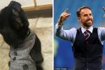 Bo do 'than tai' cua nguoi hung World Cup Southgate het thieng hinh anh 8