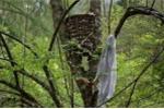 Huyền bí khu rừng táng trẻ con… trên cây ở Cao Bằng