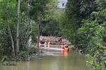 Bình Định: Nữ công nhân khơi thông dòng chảy bị lũ cuốn mất tích
