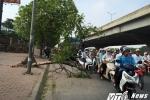 Trước bão số 2, cây đổ vẫn ngổn ngang trên vỉa hè Hà Nội