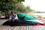 Cá heo hấp hối, dạt vào bờ biển Bình Định