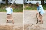 Video: Cụ bà 74 tuổi tay không quật chết rắn