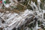 Mù Cang Chải 'đông cứng' trong lớp băng giá dày đặc
