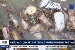 Clip: Kinh hoàng xác lợn chết hôi thối vứt đầy ao ở Phú Thọ