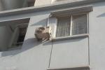 Hà Nội: Gần 90 hộ dân bỗng dưng 'rơi' vào chung cư miễn phí