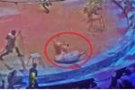 Clip: Đang diễn xiếc, hổ và sư tử nổi điên lao vào cắn xé nhau