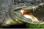 Video: Nghi phạm hiếp dâm bị đánh, quăng vào chuồng cá sấu